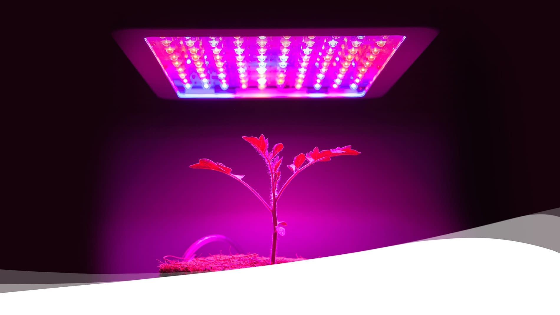 Dr. Muller light therapy research on growth plants