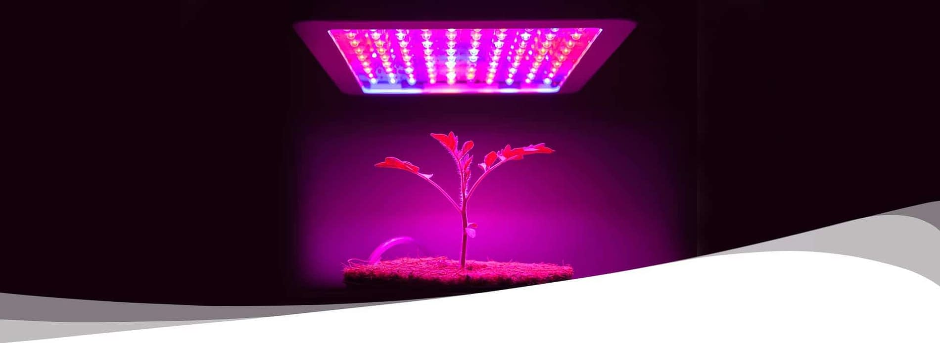 light therapy on plants